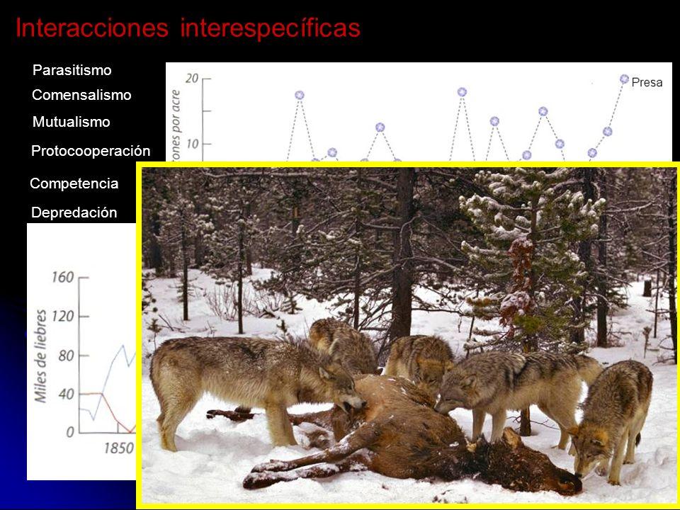 Competencia Depredación Parasitismo Comensalismo Mutualismo Protocooperación Interacciones interespecíficas