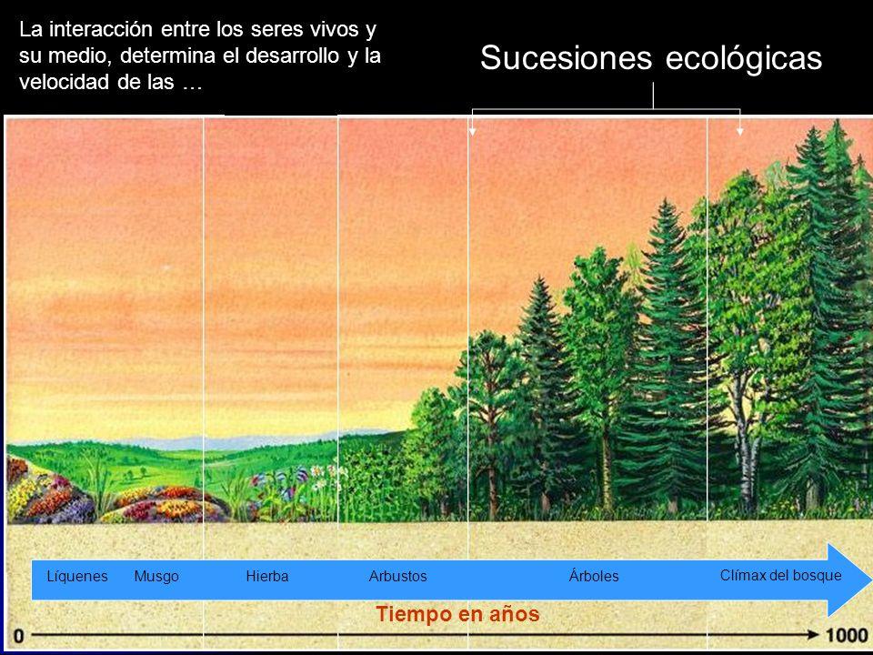Sucesiones ecológicas PrimariaSecundaria Preexistencia de una comunidad desaparecida La interacción entre los seres vivos y su medio, determina el des