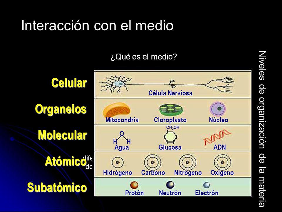 ¿Qué es el medio? Materia Energía Presenta diferentes niveles de organización O H H CH 2 OH Subatómico ElectrónNeutrónProtón NitrógenoCarbonoHidrógeno