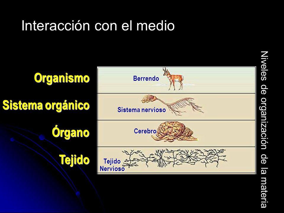 Población Manada de berrendos Águila Agua Superficie terrestre Comunidad Ecosistema Biosfera Berrendos Águila hierba Berrendos Serpiente Arbustos Suelo Aire Serpiente Interacción con el medio Niveles de organización de la materia