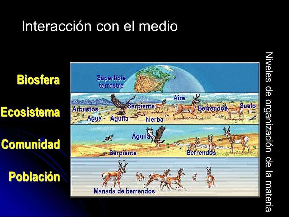 Población Manada de berrendos Águila Agua Superficie terrestre Comunidad Ecosistema Biosfera Berrendos Águila hierba Berrendos Serpiente Arbustos Suel