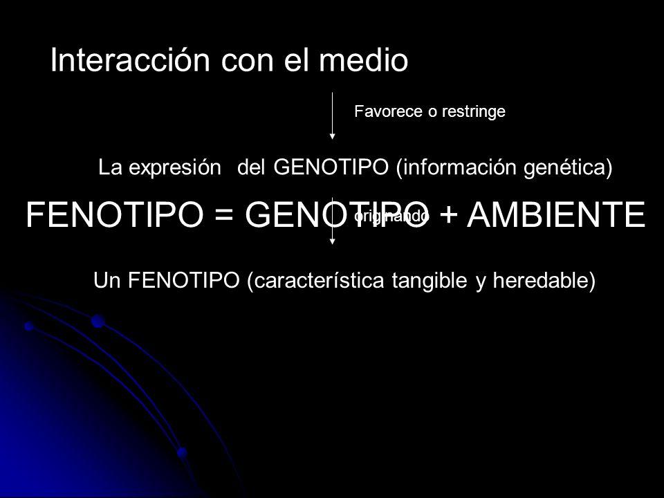 Interacción con el medio Favorece o restringe La expresión del GENOTIPO (información genética) originando Un FENOTIPO (característica tangible y hered