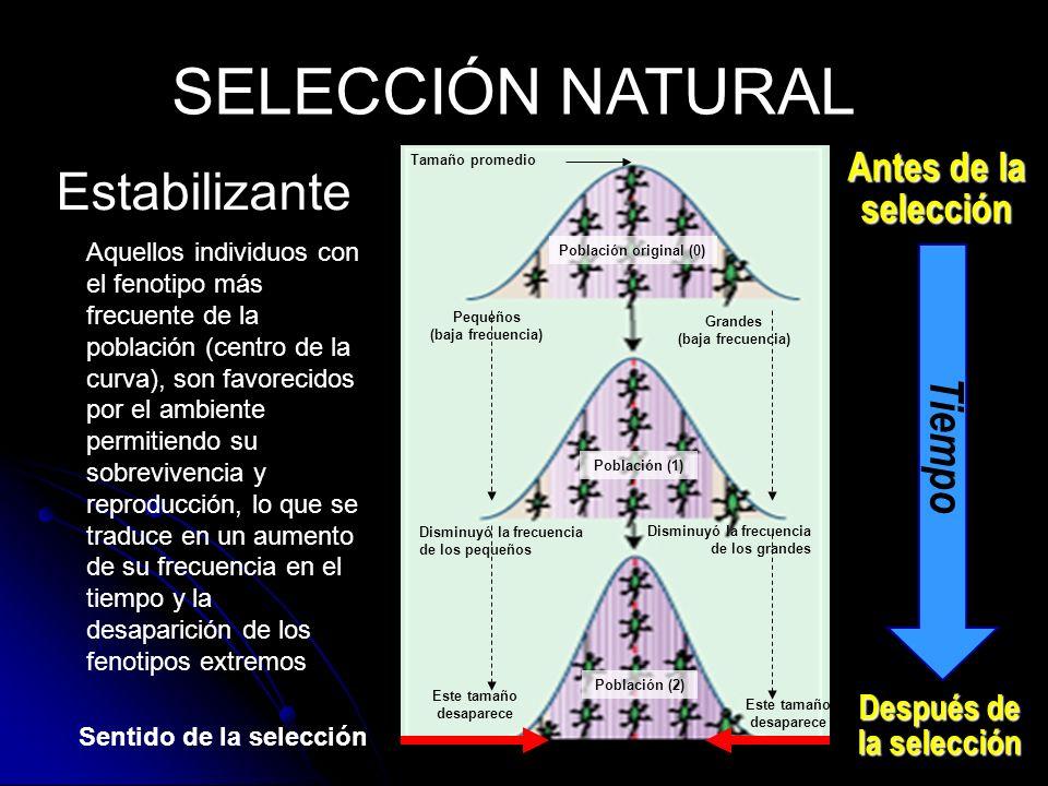 Sentido de la selección Estabilizante SELECCIÓN NATURAL Antes de la selección Después de la selección Tiempo Tamaño promedio Pequeños (baja frecuencia