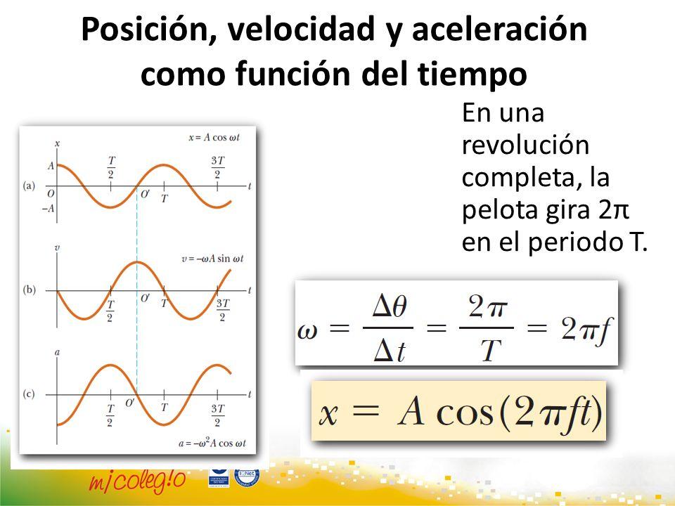 Posición, velocidad y aceleración como función del tiempo En una revolución completa, la pelota gira 2π en el periodo T.
