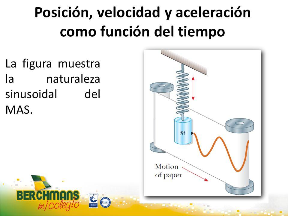 Posición, velocidad y aceleración como función del tiempo La figura muestra la naturaleza sinusoidal del MAS.