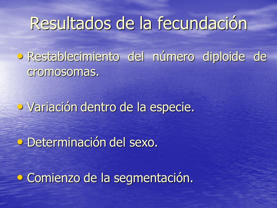 Resultados de la fecundación Restablecimiento del número diploide de cromosomas. Restablecimiento del número diploide de cromosomas. Variación dentro