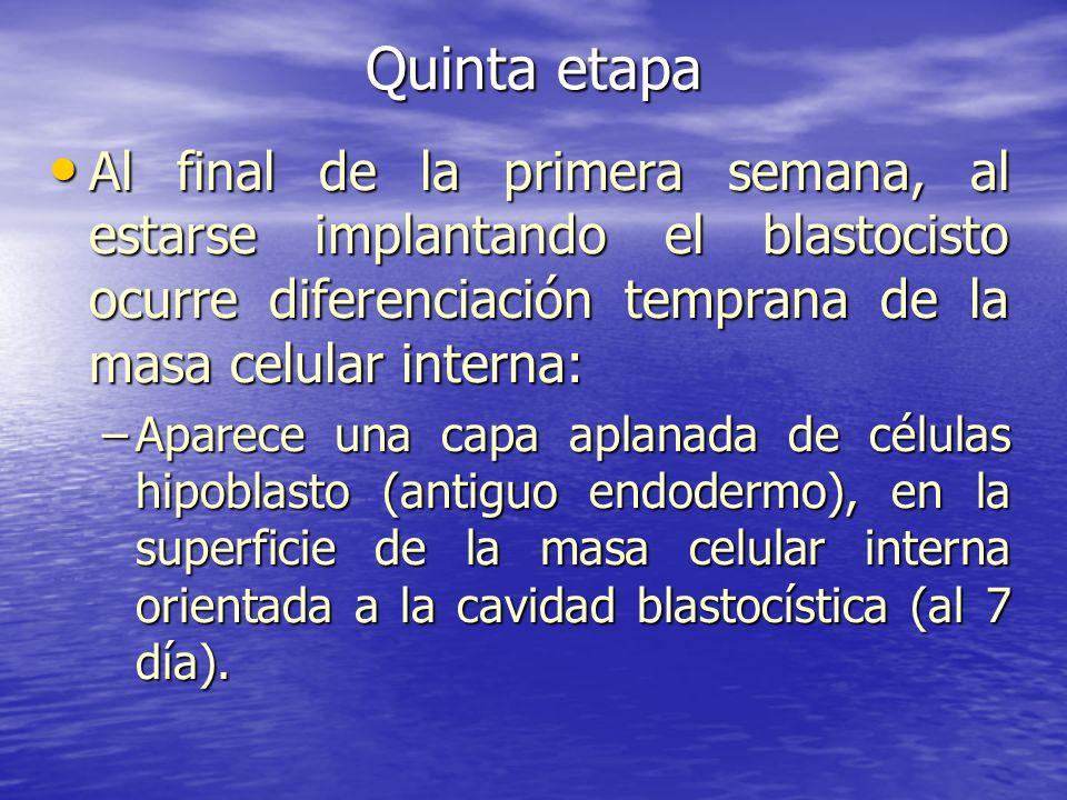 Quinta etapa Al final de la primera semana, al estarse implantando el blastocisto ocurre diferenciación temprana de la masa celular interna: Al final