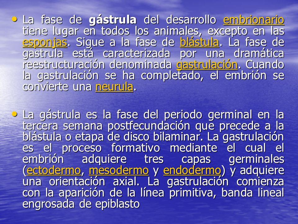 La fase de gástrula del desarrollo embrionario tiene lugar en todos los animales, excepto en las esponjas. Sigue a la fase de blástula. La fase de gas