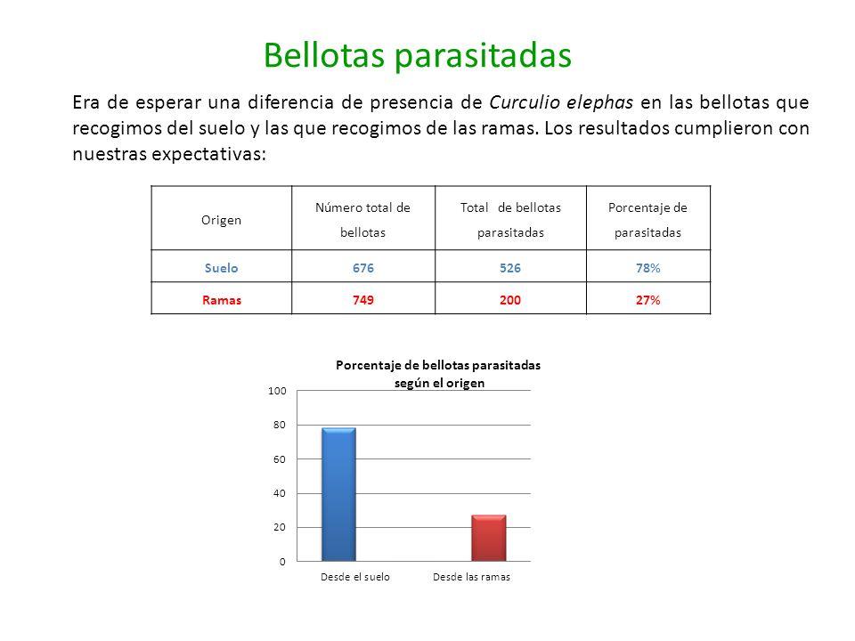 Bellotas parasitadas Origen Número total de bellotas Total de bellotas parasitadas Porcentaje de parasitadas Suelo67652678% Ramas74920027% Era de espe