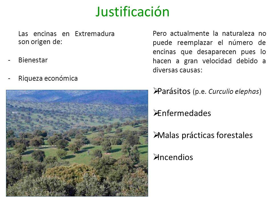 Justificación Las encinas en Extremadura son origen de: -Bienestar -Riqueza económica Pero actualmente la naturaleza no puede reemplazar el número de