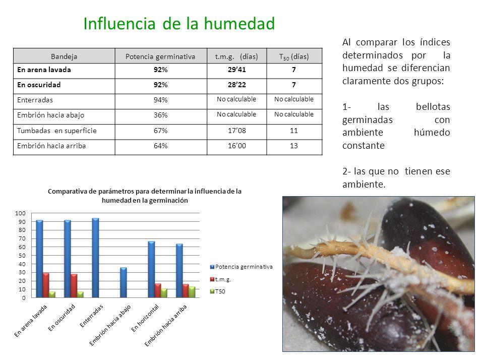 Influencia de la humedad BandejaPotencia germinativat.m.g. (días)T 50 (días) En arena lavada92%29417 En oscuridad92%28227 Enterradas94% No calculable