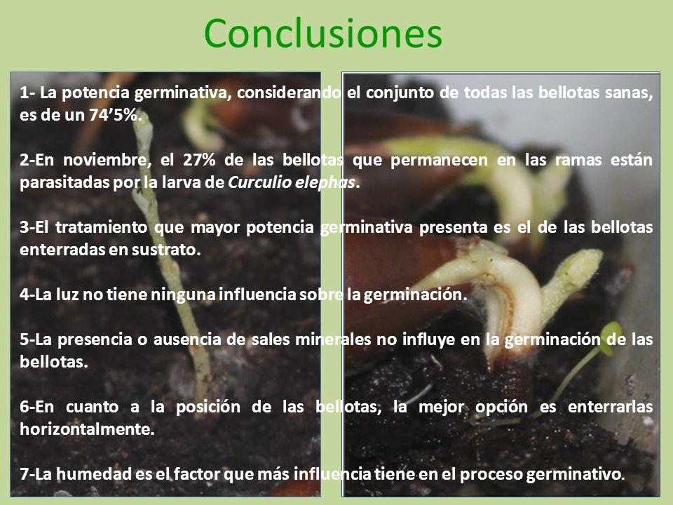 Conclusiones 1- La potencia germinativa, considerando el conjunto de todas las bellotas sanas, es de un 745%. 2-En noviembre, el 27% de las bellotas q