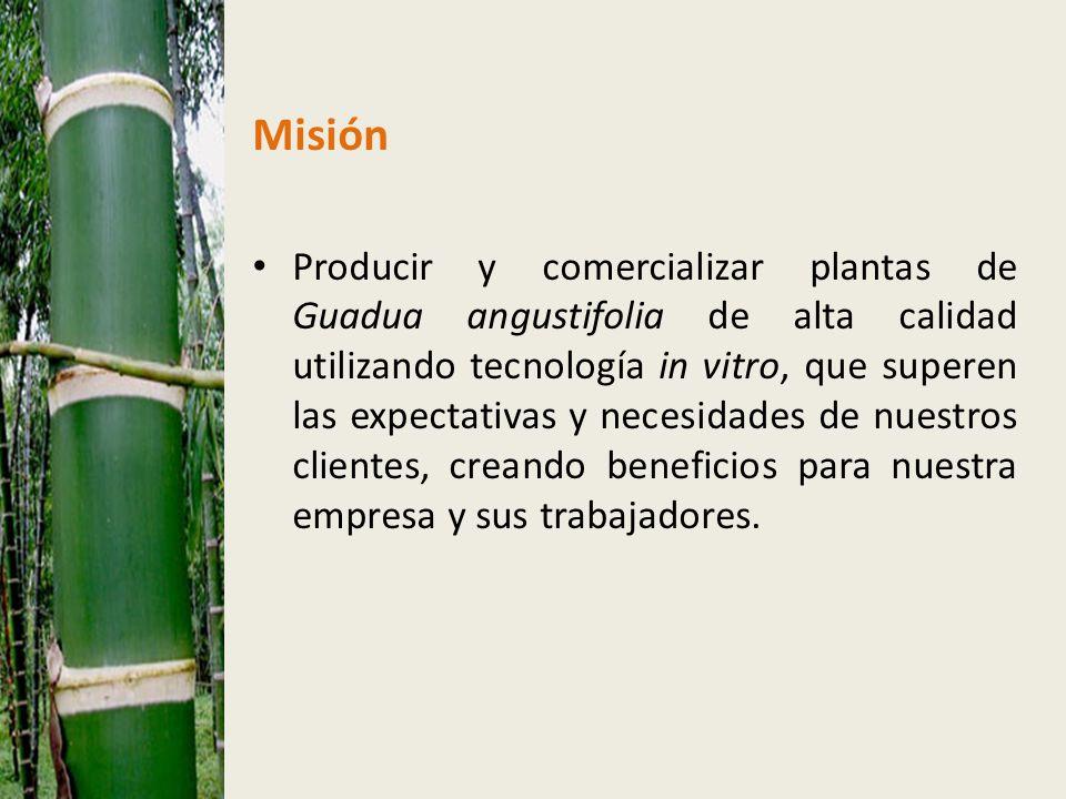 Misión Producir y comercializar plantas de Guadua angustifolia de alta calidad utilizando tecnología in vitro, que superen las expectativas y necesidades de nuestros clientes, creando beneficios para nuestra empresa y sus trabajadores.
