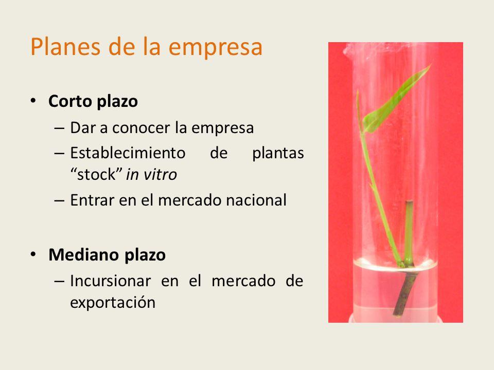 Planes de la empresa Corto plazo – Dar a conocer la empresa – Establecimiento de plantas stock in vitro – Entrar en el mercado nacional Mediano plazo – Incursionar en el mercado de exportación