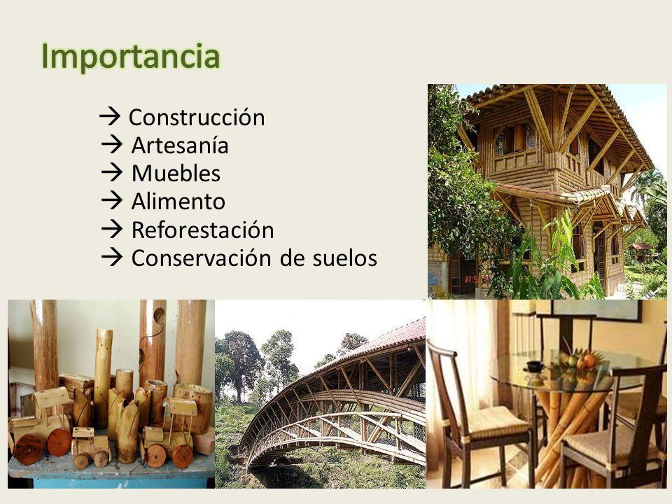 Construcción Artesanía Muebles Alimento Reforestación Conservación de suelos