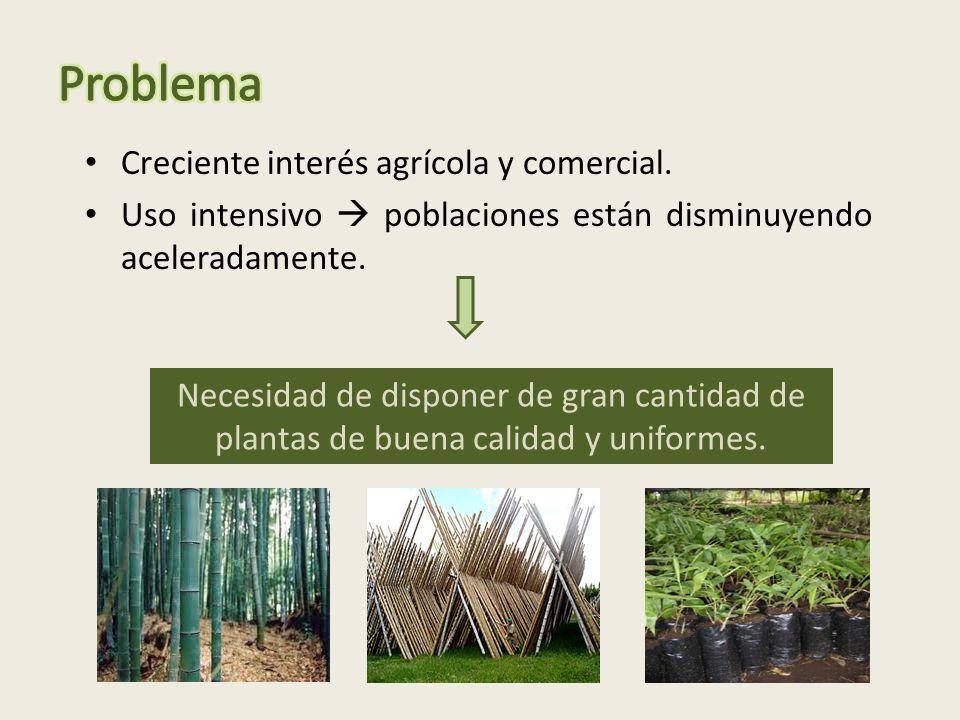 Creciente interés agrícola y comercial.