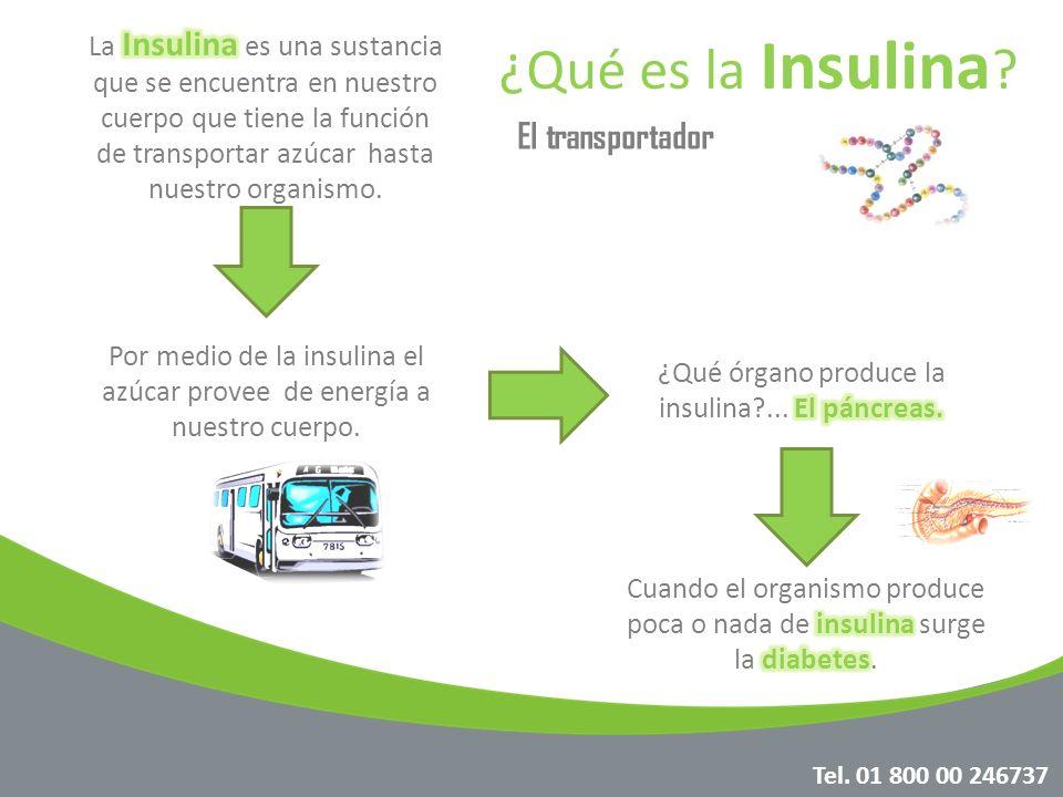 ¿Qué es la Insulina ? Por medio de la insulina el azúcar provee de energía a nuestro cuerpo. El transportador Tel. 01 800 00 246737