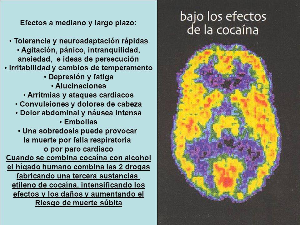 Efectos a mediano y largo plazo: Tolerancia y neuroadaptación rápidas Agitación, pánico, intranquilidad, ansiedad, e ideas de persecución Irritabilida