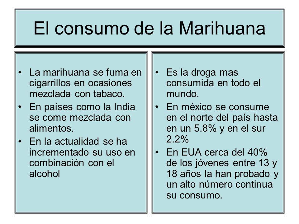 El consumo de la Marihuana La marihuana se fuma en cigarrillos en ocasiones mezclada con tabaco. En países como la India se come mezclada con alimento