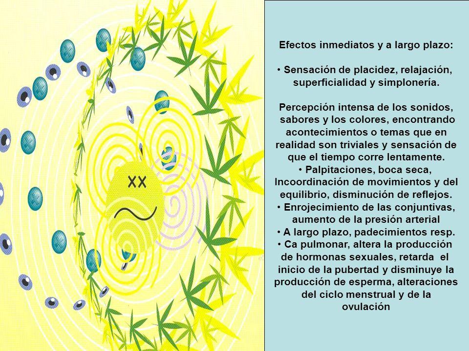 Efectos inmediatos y a largo plazo: Sensación de placidez, relajación, superficialidad y simplonería. Percepción intensa de los sonidos, sabores y los