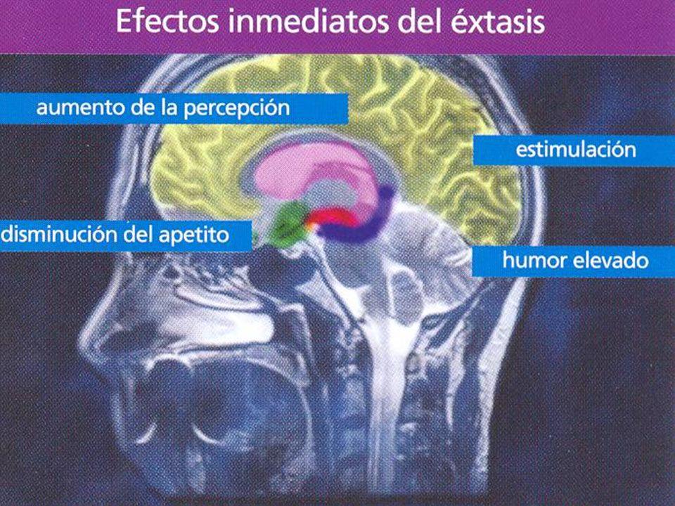 Que puede hacer una persona adicta que desea dejar de consumir Considerando que la adicción es una enfermedad y que se ha desarrollado neuroadaptación, no puede hacerlo solo.