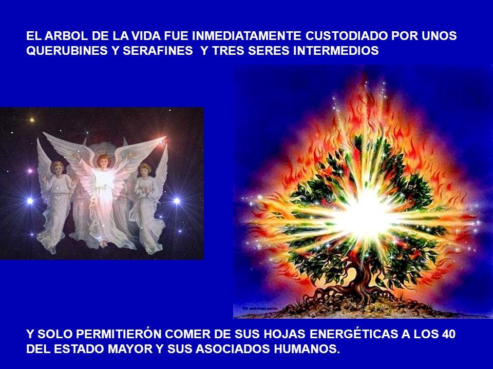 EL ARBOL DE LA VIDA FUE INMEDIATAMENTE CUSTODIADO POR UNOS QUERUBINES Y SERAFINES Y TRES SERES INTERMEDIOS Y SOLO PERMITIERÓN COMER DE SUS HOJAS ENERGÉTICAS A LOS 40 DEL ESTADO MAYOR Y SUS ASOCIADOS HUMANOS.