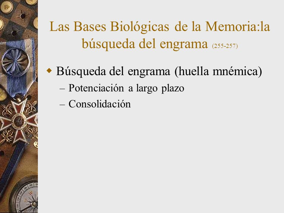 Las Bases Biológicas de la Memoria:la búsqueda del engrama (255-257) Búsqueda del engrama (huella mnémica) – Potenciación a largo plazo – Consolidación