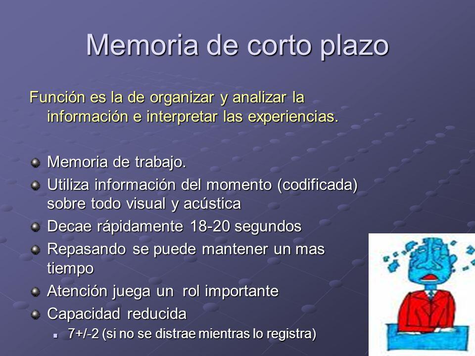 Memoria de corto plazo Función es la de organizar y analizar la información e interpretar las experiencias. Memoria de trabajo. Utiliza información de