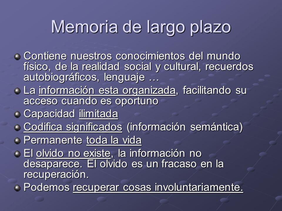 Memoria de largo plazo Contiene nuestros conocimientos del mundo físico, de la realidad social y cultural, recuerdos autobiográficos, lenguaje … La in