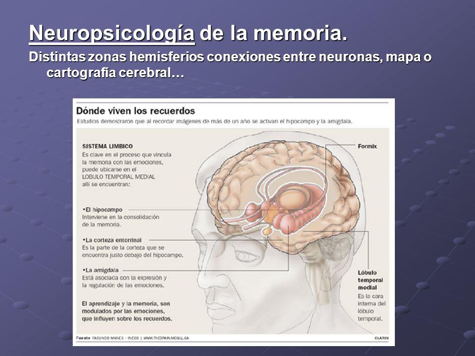 Neuropsicología de la memoria. Distintas zonas hemisferios conexiones entre neuronas, mapa o cartografía cerebral…