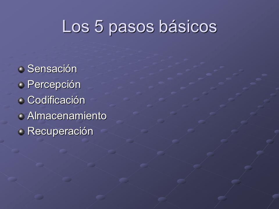Los 5 pasos básicos SensaciónPercepciónCodificaciónAlmacenamientoRecuperación