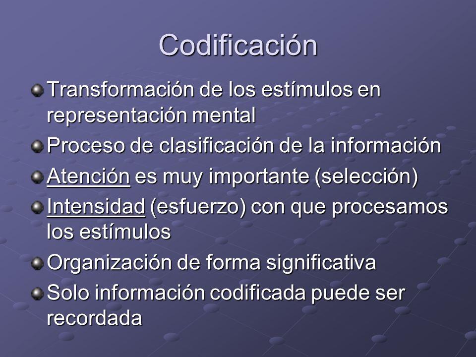 Codificación Transformación de los estímulos en representación mental Proceso de clasificación de la información Atención es muy importante (selección