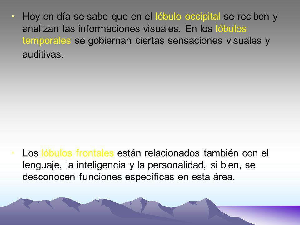 Hoy en día se sabe que en el lóbulo occipital se reciben y analizan las informaciones visuales. En los lóbulos temporales se gobiernan ciertas sensaci