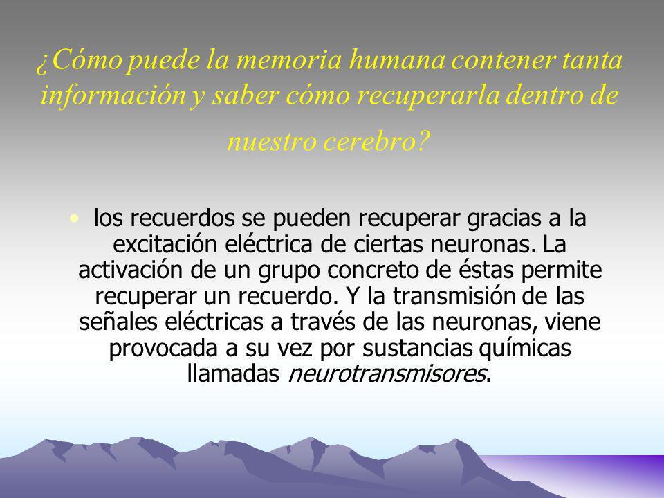 ¿Cómo puede la memoria humana contener tanta información y saber cómo recuperarla dentro de nuestro cerebro.