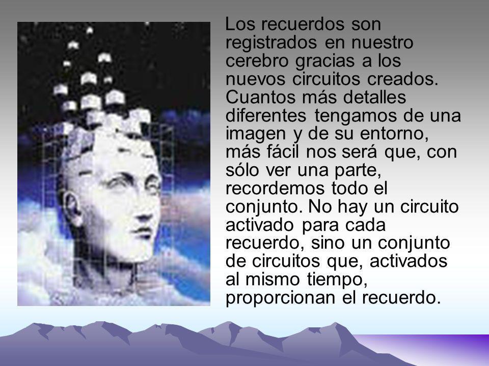 Los recuerdos son registrados en nuestro cerebro gracias a los nuevos circuitos creados.