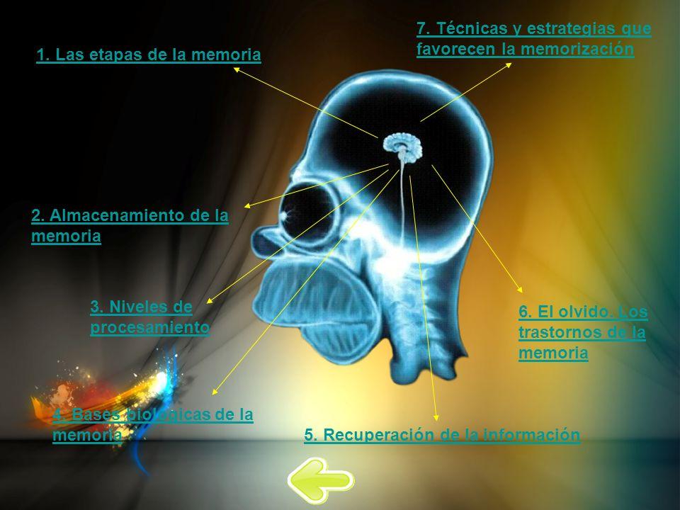 1. Las etapas de la memoria 2. Almacenamiento de la memoria 3. Niveles de procesamiento 4. Bases biológicas de la memoria 5. Recuperación de la inform