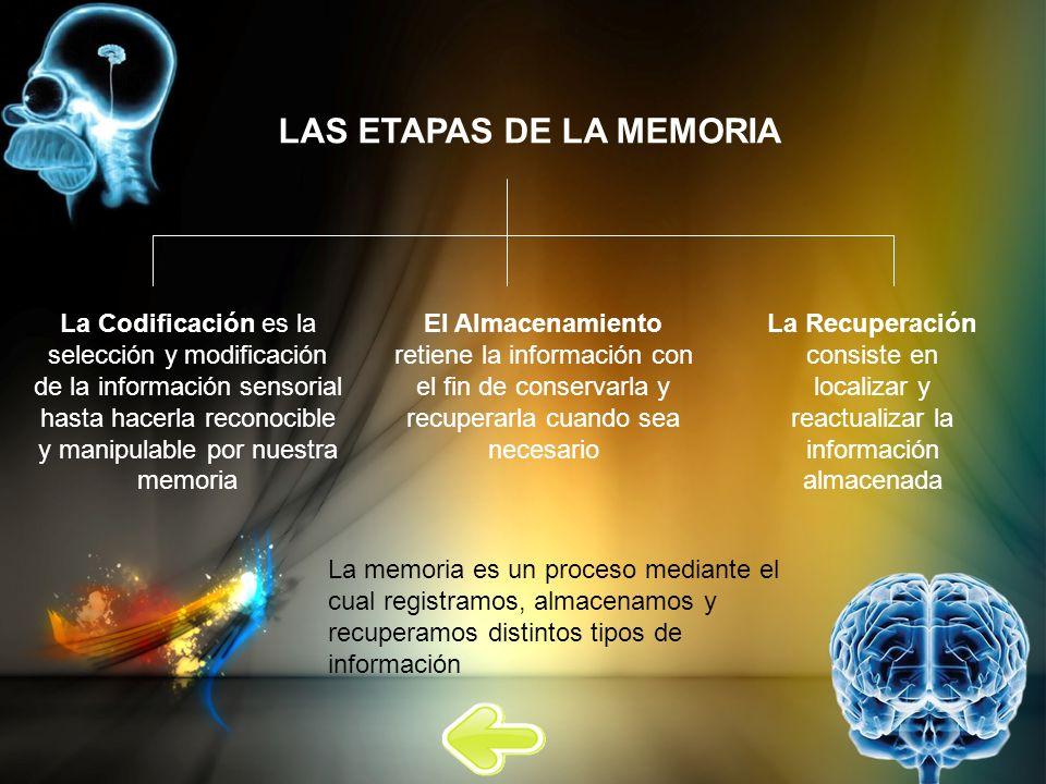 LAS ETAPAS DE LA MEMORIA La Codificación es la selección y modificación de la información sensorial hasta hacerla reconocible y manipulable por nuestr