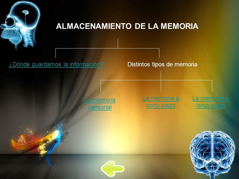 ALMACENAMIENTO DE LA MEMORIA ¿Dónde guardamos la información?Distintos tipos de memoria La memoria sensorial La memoria a corto plazo La memoria a lar