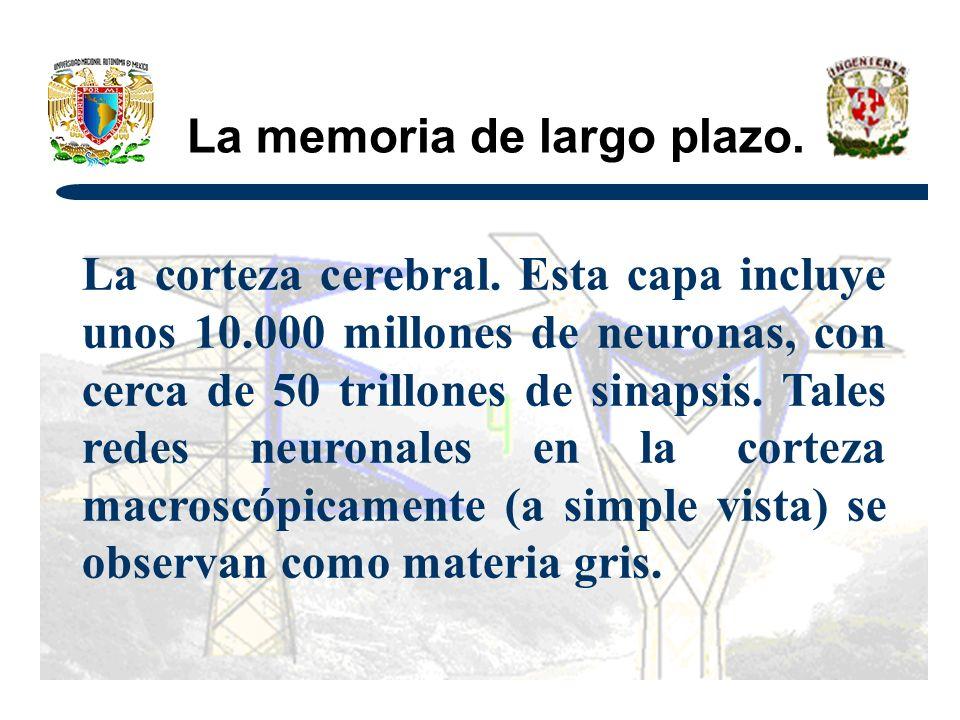 La memoria de largo plazo.La corteza cerebral.