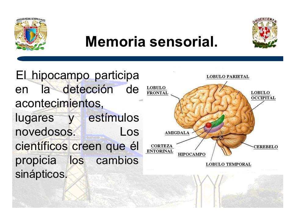 Memoria sensorial.