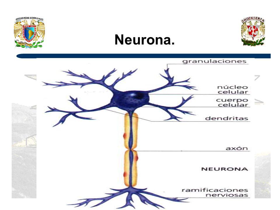 Neurona.