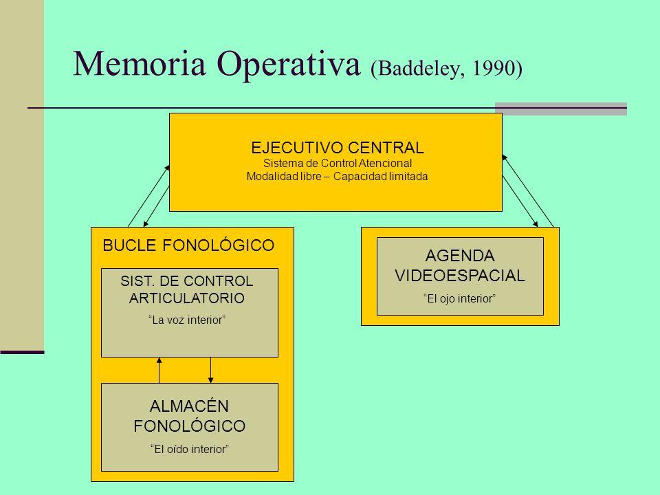 Memoria Operativa (Baddeley, 1990) EJECUTIVO CENTRAL Sistema de Control Atencional Modalidad libre – Capacidad limitada BUCLE FONOLÓGICO SIST. DE CONT