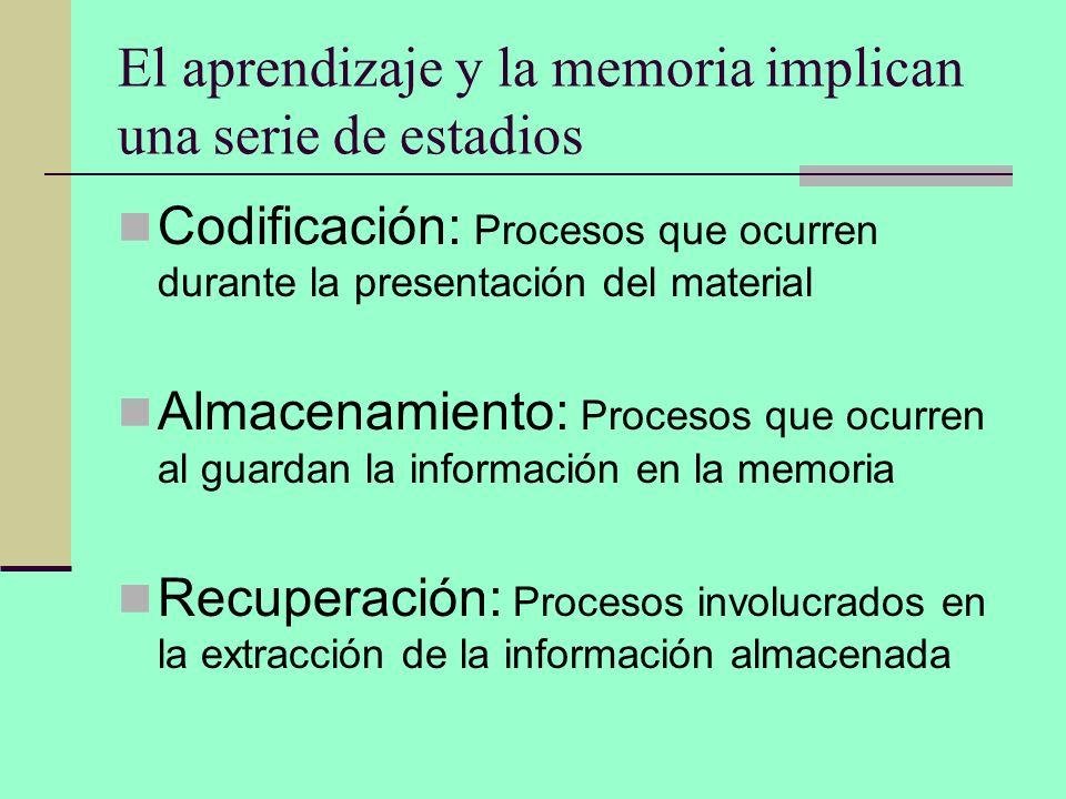 El aprendizaje y la memoria implican una serie de estadios Codificación: Procesos que ocurren durante la presentación del material Almacenamiento: Pro