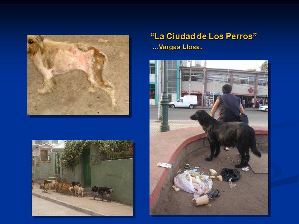 La Ciudad de Los Perros …Vargas Llosa. …Vargas Llosa.