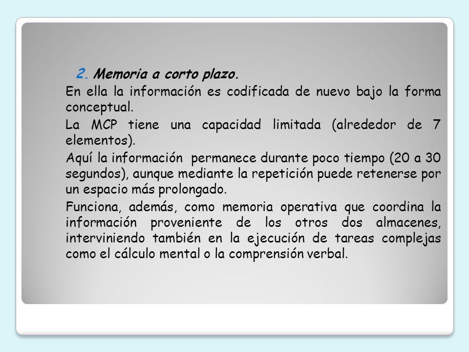3.Memoria a largo plazo.
