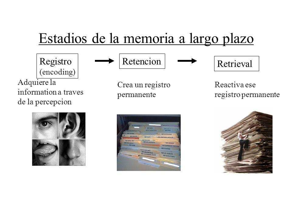 Estadios de la memoria a largo plazo Registro (encoding) Retencion Retrieval Crea un registro permanente Reactiva ese registro permanente Adquiere la