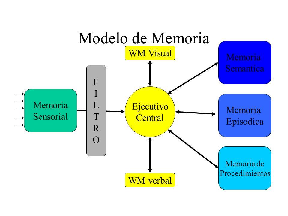 Modelo de Memoria Memoria Sensorial Memoria Episodica Ejecutivo Central WM Visual WM verbal Memoria de Procedimientos Memoria Semantica FILTROFILTRO