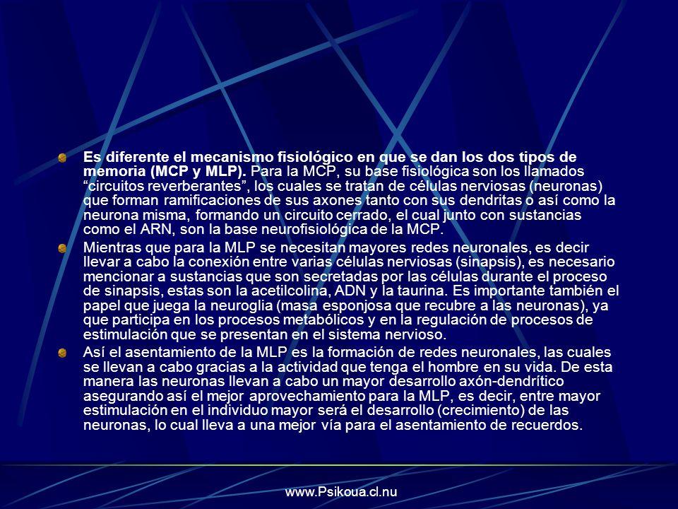 www.Psikoua.cl.nu Es diferente el mecanismo fisiológico en que se dan los dos tipos de memoria (MCP y MLP). Para la MCP, su base fisiológica son los l