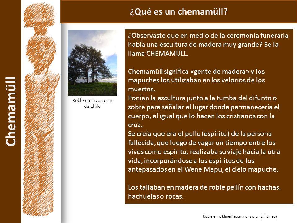Chemamüll Roble en wikimediacommons.org (Lin Linao) ¿Qué es un chemamüll? ¿Observaste que en medio de la ceremonia funeraria había una escultura de ma
