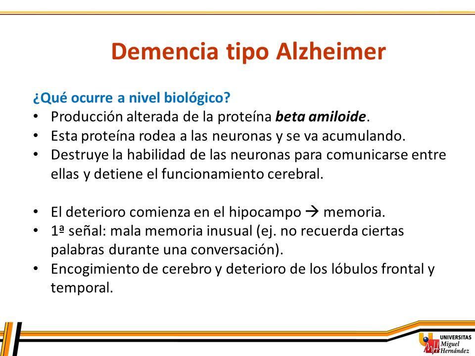 Demencia tipo Alzheimer ¿Qué ocurre a nivel biológico? Producción alterada de la proteína beta amiloide. Esta proteína rodea a las neuronas y se va ac